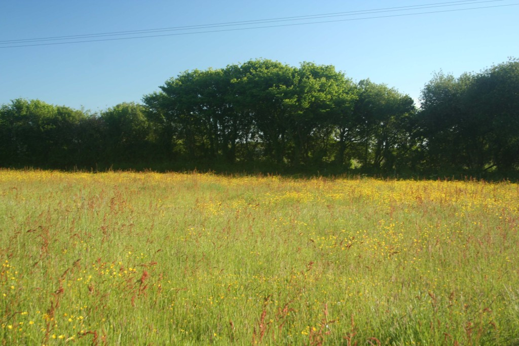 The fields around the Lodges in summer