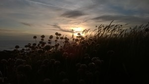 Croyde Beach at Sunset and Wild Grasses