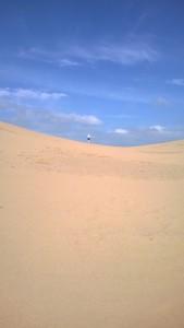 Sahara Desert in Braunton