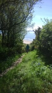 Down through the woods to Saunton sands